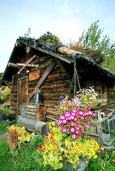 Quaint sod roofed log home with flowers in Alaska